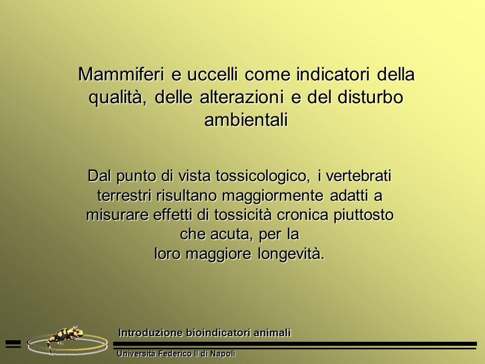 Università Federico II di Napoli Introduzione bioindicatori animali Dal punto di vista tossicologico, i vertebrati terrestri risultano maggiormente ad