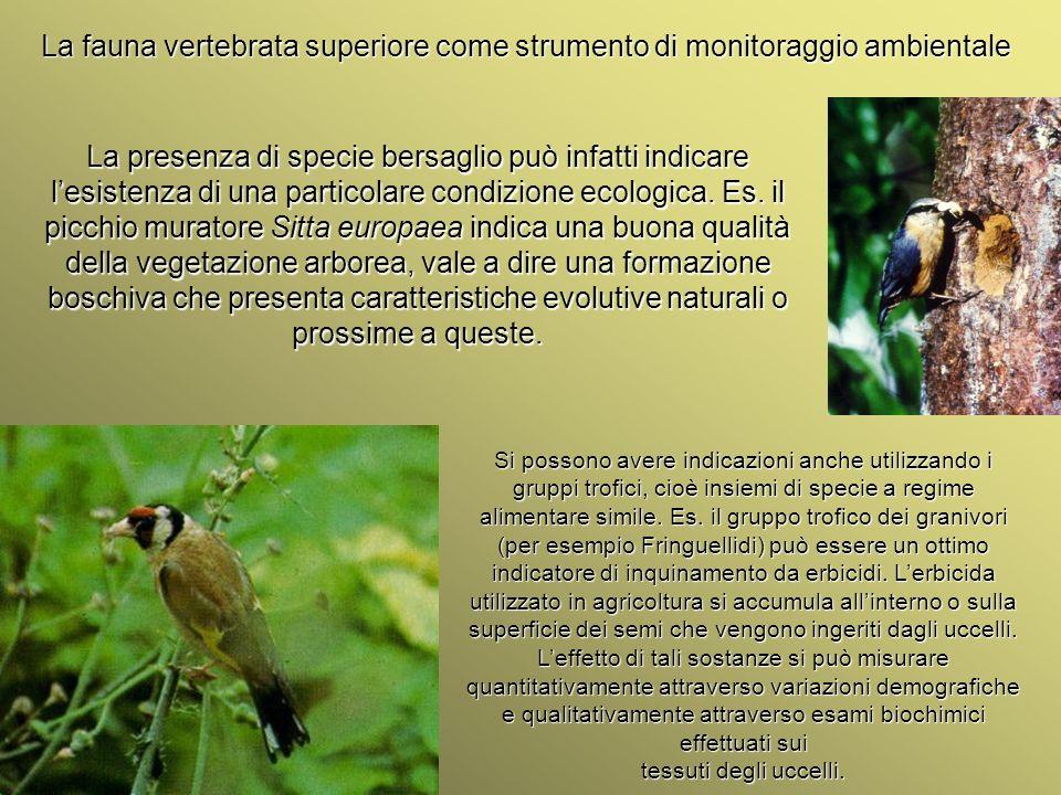 Università Federico II di Napoli Introduzione bioindicatori animali La fauna vertebrata superiore come strumento di monitoraggio ambientale La presenz