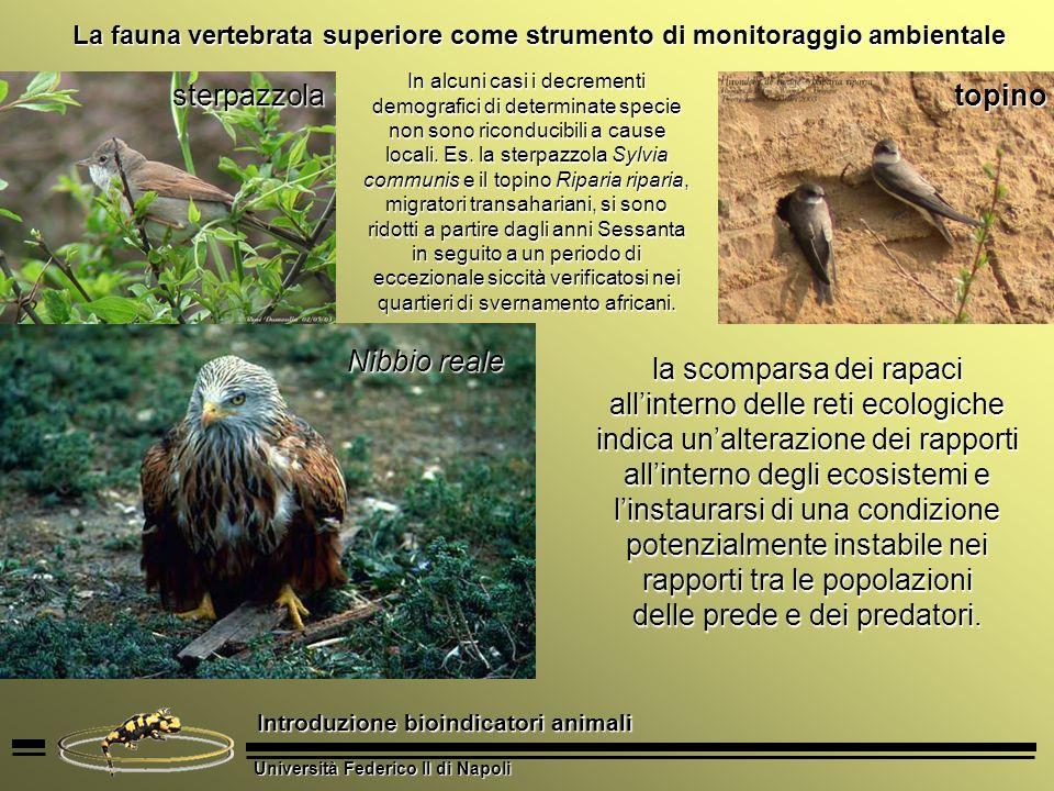 Università Federico II di Napoli Introduzione bioindicatori animali La fauna vertebrata superiore come strumento di monitoraggio ambientale la scompar