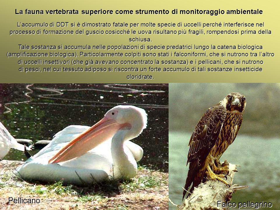 Università Federico II di Napoli Introduzione bioindicatori animali La fauna vertebrata superiore come strumento di monitoraggio ambientale Laccumulo
