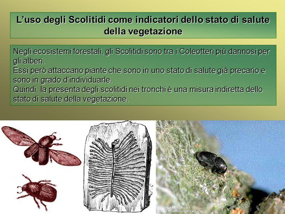 Università Federico II di Napoli Introduzione bioindicatori animali Luso degli Scolitidi come indicatori dello stato di salute della vegetazione Negli
