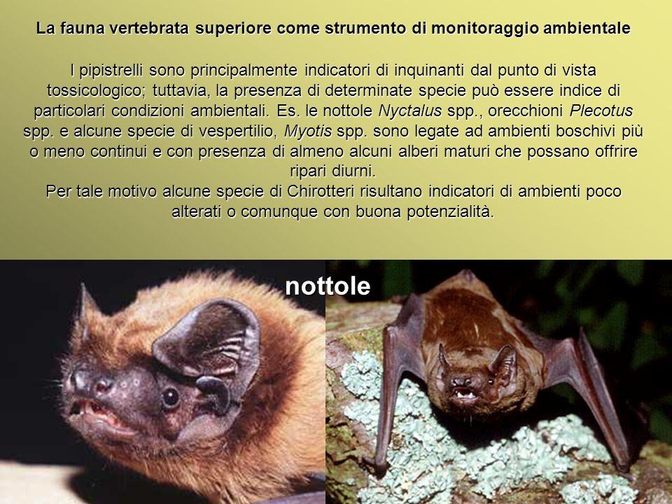 Università Federico II di Napoli Introduzione bioindicatori animali La fauna vertebrata superiore come strumento di monitoraggio ambientale I pipistre