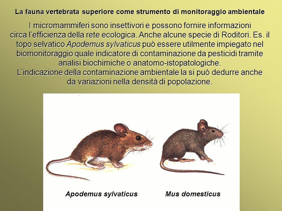 Università Federico II di Napoli Introduzione bioindicatori animali La fauna vertebrata superiore come strumento di monitoraggio ambientale I micromam