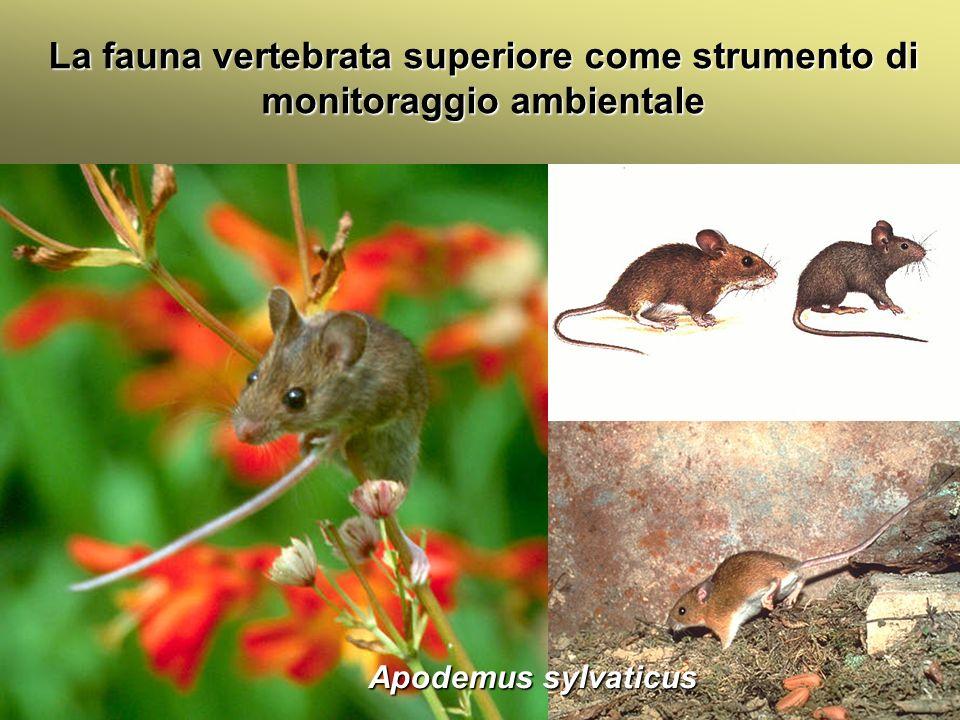 Università Federico II di Napoli Introduzione bioindicatori animali La fauna vertebrata superiore come strumento di monitoraggio ambientale Apodemus s