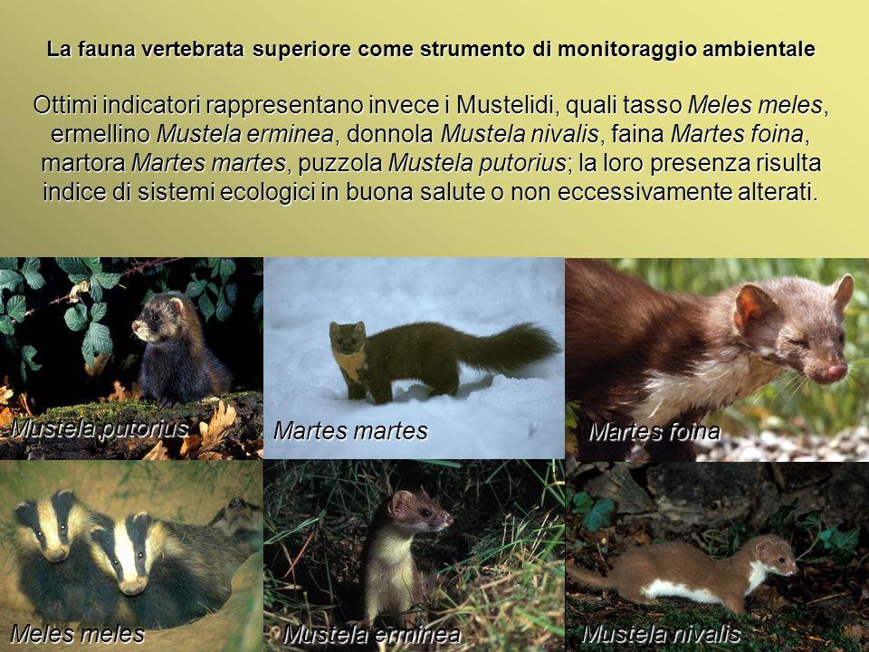Università Federico II di Napoli Introduzione bioindicatori animali La fauna vertebrata superiore come strumento di monitoraggio ambientale Ottimi ind