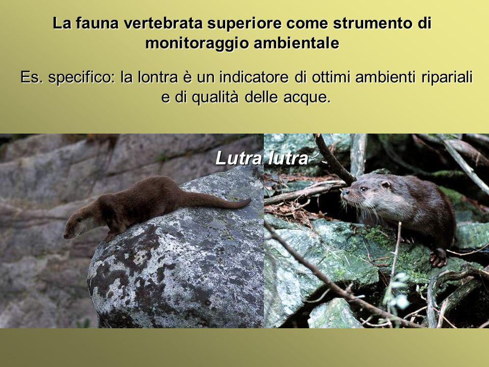 Università Federico II di Napoli Introduzione bioindicatori animali La fauna vertebrata superiore come strumento di monitoraggio ambientale Es. specif