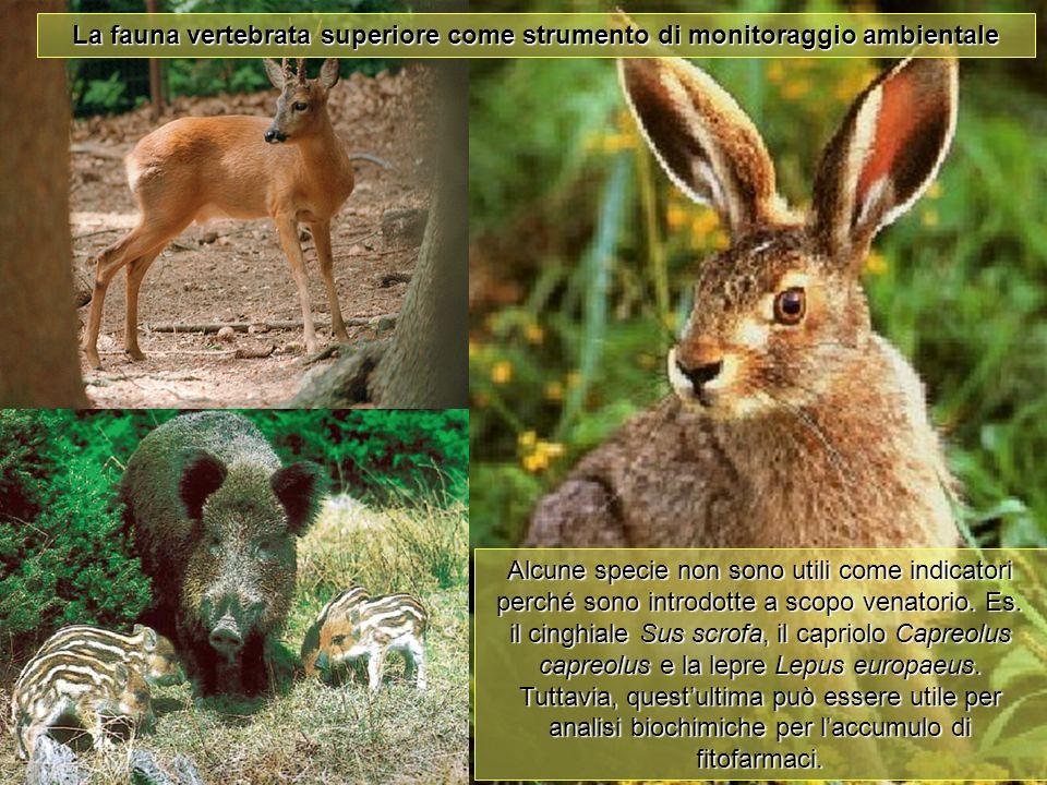Università Federico II di Napoli Introduzione bioindicatori animali La fauna vertebrata superiore come strumento di monitoraggio ambientale Alcune spe