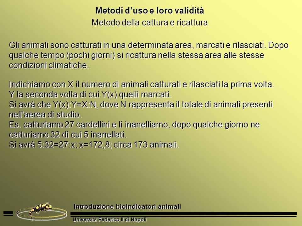 Università Federico II di Napoli Introduzione bioindicatori animali Metodi duso e loro validità Metodo della cattura e ricattura Gli animali sono catt