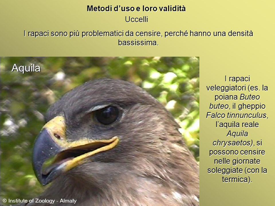 Università Federico II di Napoli Introduzione bioindicatori animali Metodi duso e loro validità Uccelli I rapaci sono più problematici da censire, per