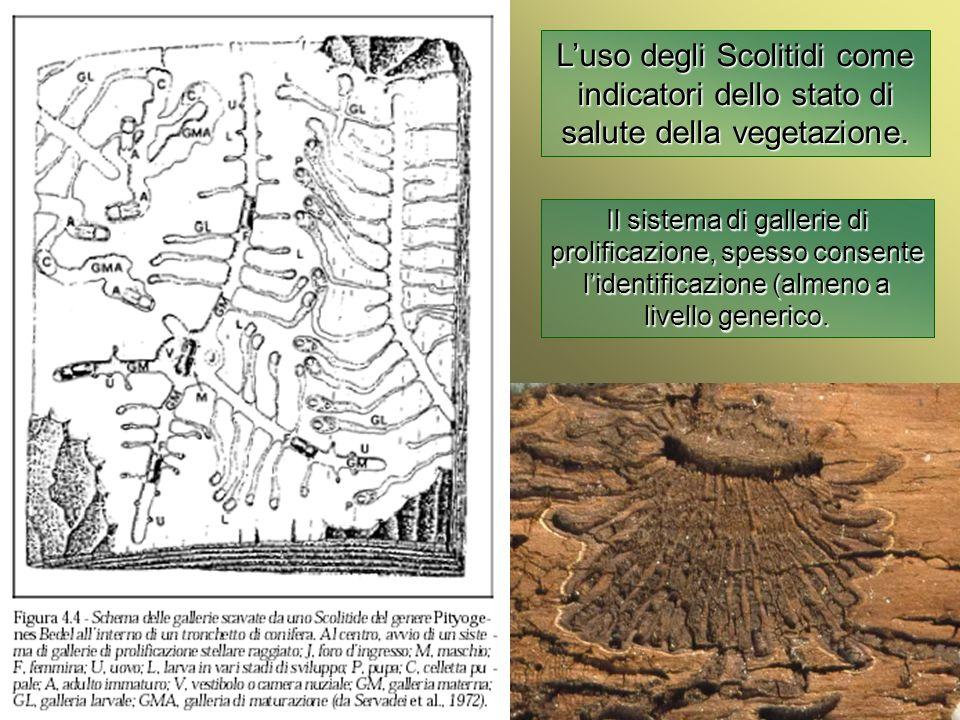 Università Federico II di Napoli Introduzione bioindicatori animali Luso degli Scolitidi come indicatori dello stato di salute della vegetazione. Il s