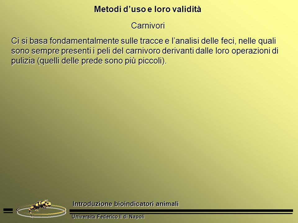 Università Federico II di Napoli Introduzione bioindicatori animali Metodi duso e loro validità Carnivori Ci si basa fondamentalmente sulle tracce e l