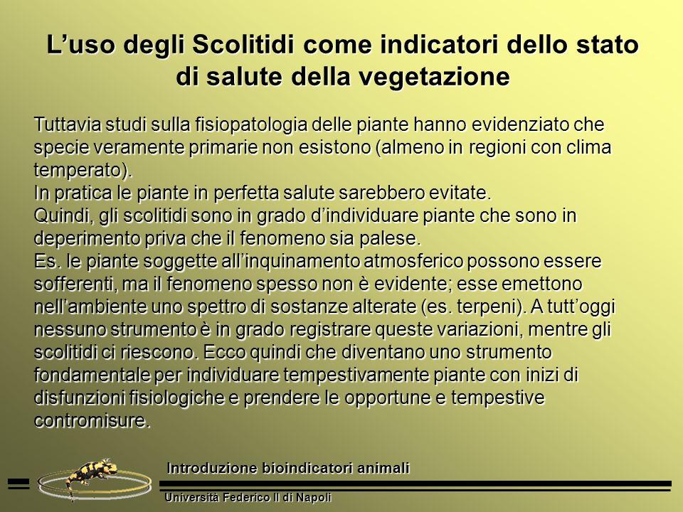 Università Federico II di Napoli Introduzione bioindicatori animali Luso degli Scolitidi come indicatori dello stato di salute della vegetazione Tutta