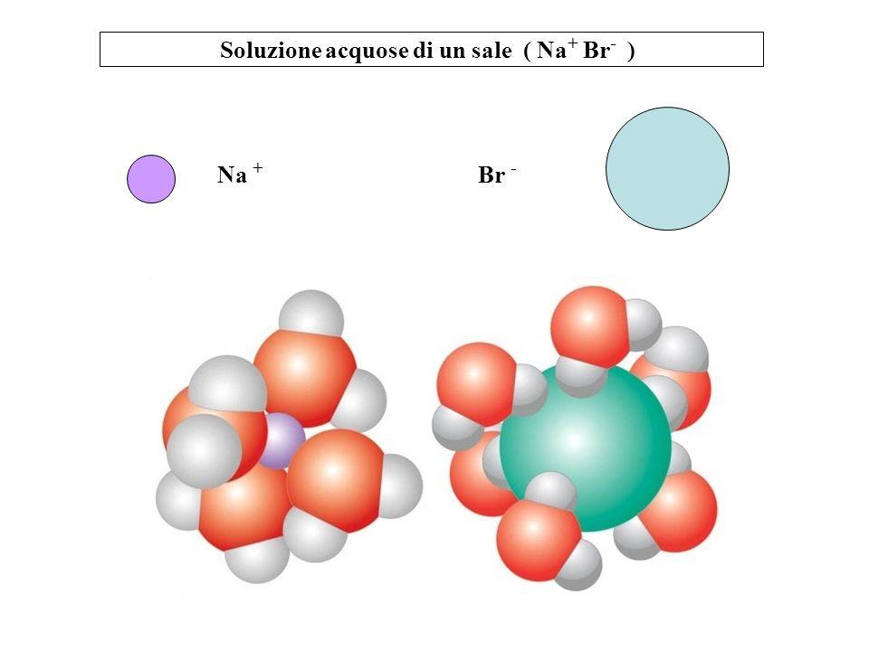 Soluzione acquose di un sale ( Na + Br - ) Na + Br -
