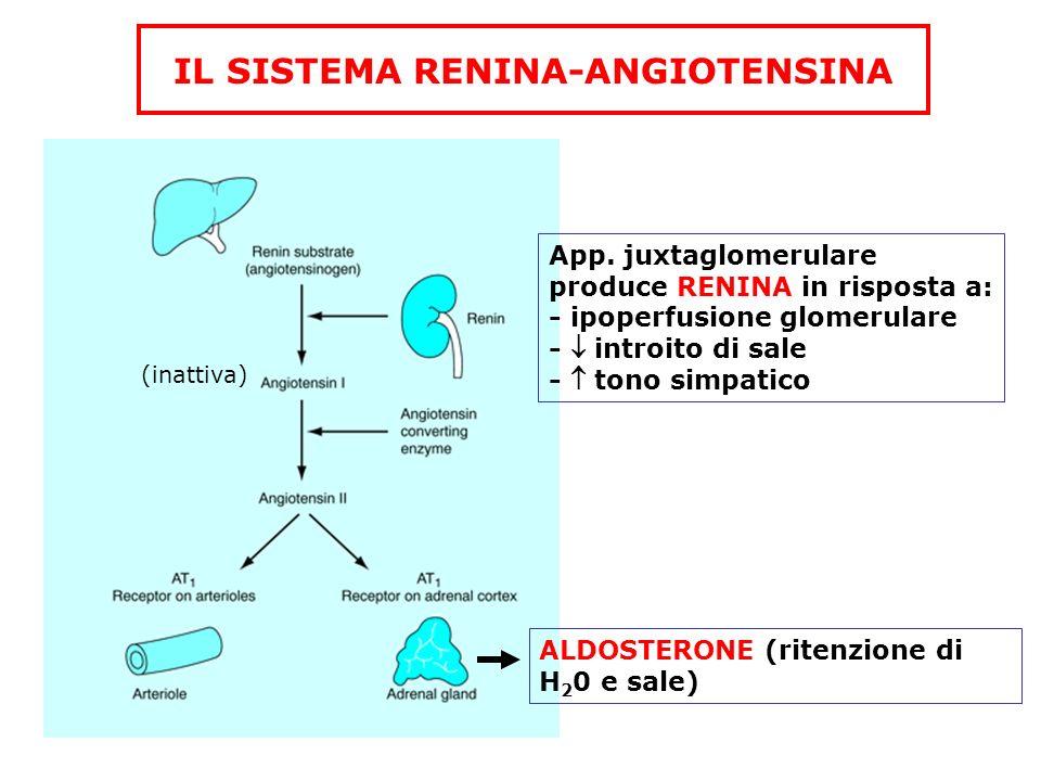 IL SISTEMA RENINA-ANGIOTENSINA App. juxtaglomerulare produce RENINA in risposta a: - ipoperfusione glomerulare - introito di sale - tono simpatico (in