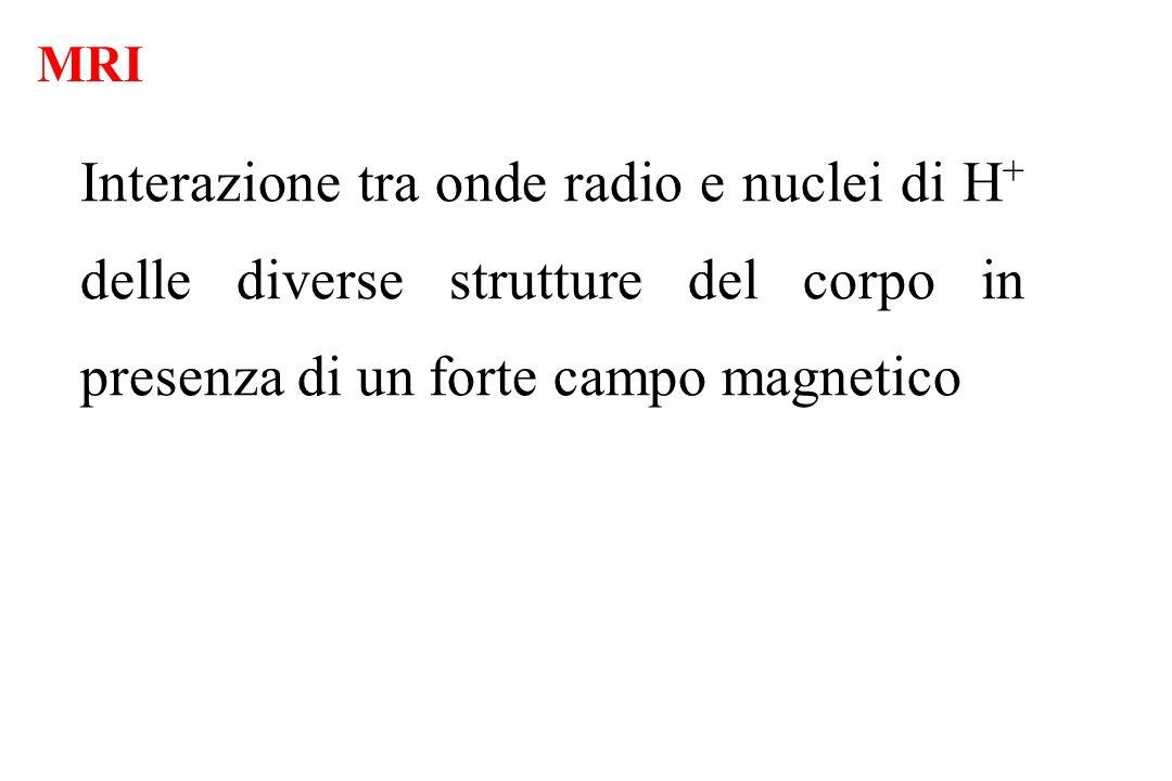 Interazione tra onde radio e nuclei di H + delle diverse strutture del corpo in presenza di un forte campo magnetico MRI