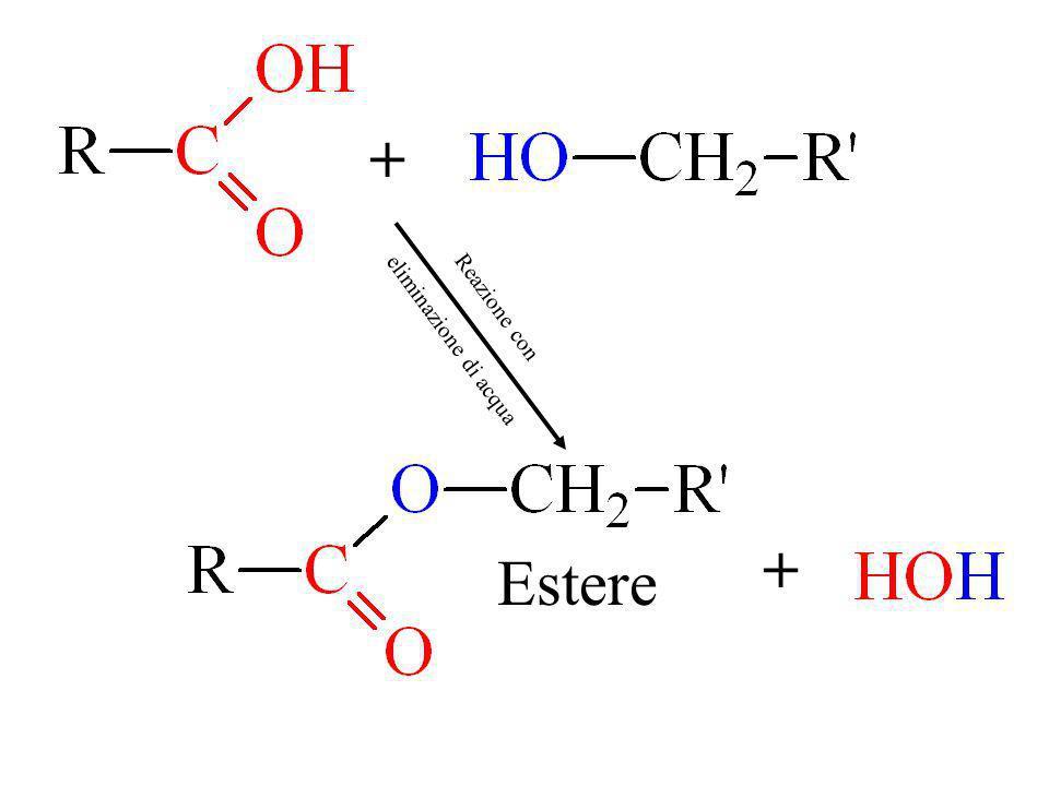 Estere + + Reazione con eliminazione di acqua