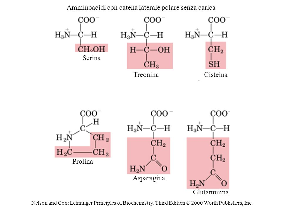 Nelson and Cox: Lehninger Principles of Biochemistry.