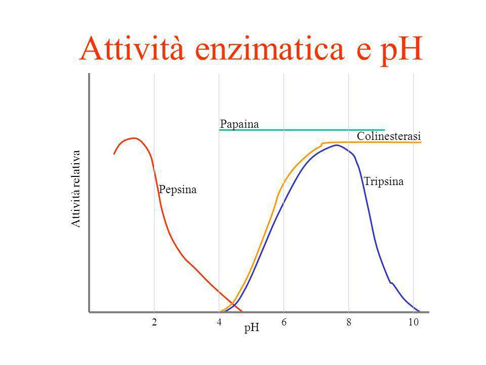 CALCOLARE IL pH: NH 3 H 2 O NH 4 + + OH - NH 3 ammoniaca C= 10 -1 M Kb 10 -5 M -log Kb C = -log 10 -5 x 10 -1 = -log 10 -6 = -log 10 -3 = 3log 10 10 =