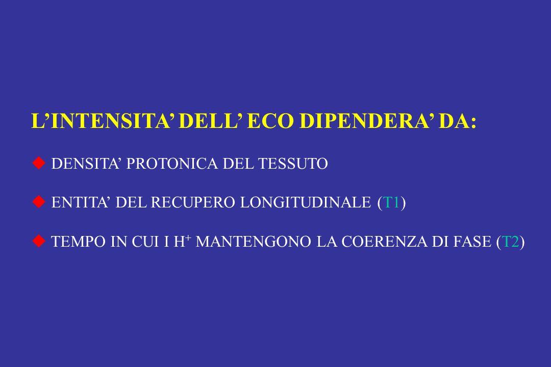 LINTENSITA DELL ECO DIPENDERA DA: DENSITA PROTONICA DEL TESSUTO ENTITA DEL RECUPERO LONGITUDINALE (T1) TEMPO IN CUI I H + MANTENGONO LA COERENZA DI FA
