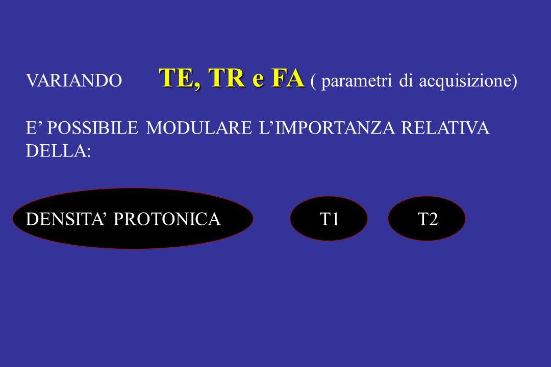 TE, TR e FA VARIANDO TE, TR e FA ( parametri di acquisizione) E POSSIBILE MODULARE LIMPORTANZA RELATIVA DELLA: DENSITA PROTONICAT1T2