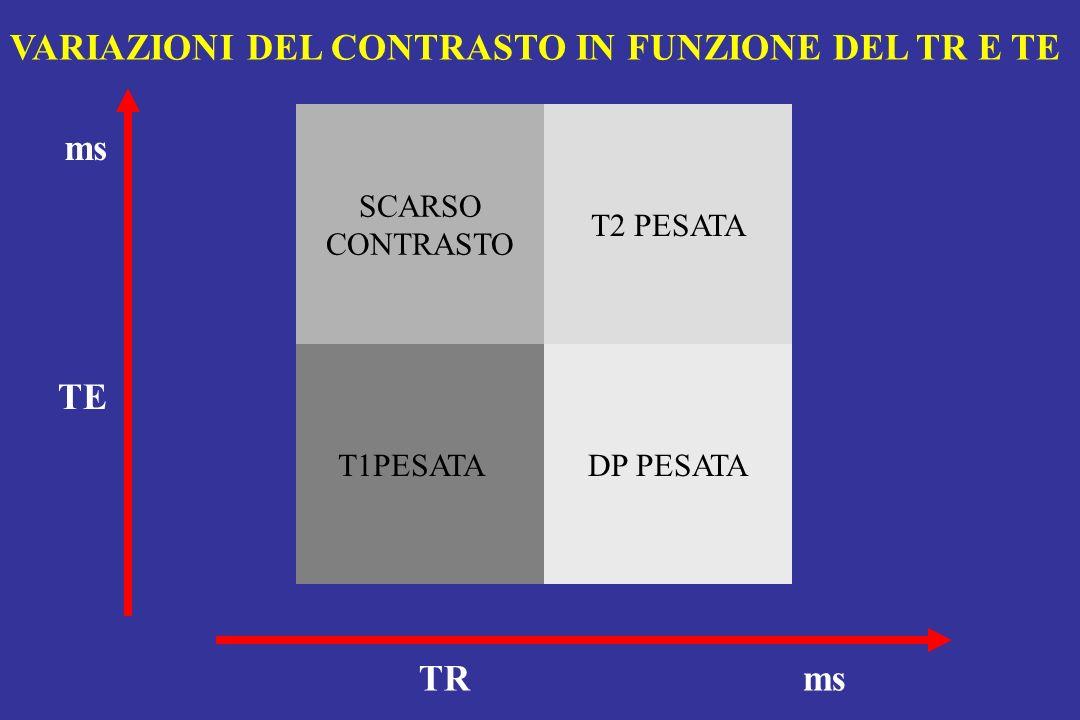 TRms TE SCARSO CONTRASTO T2 PESATA DP PESATA T1PESATA VARIAZIONI DEL CONTRASTO IN FUNZIONE DEL TR E TE ms
