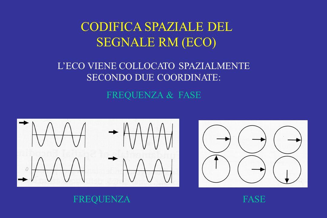 CODIFICA SPAZIALE DEL SEGNALE RM (ECO) LECO VIENE COLLOCATO SPAZIALMENTE SECONDO DUE COORDINATE: FREQUENZA & FASE FREQUENZAFASE