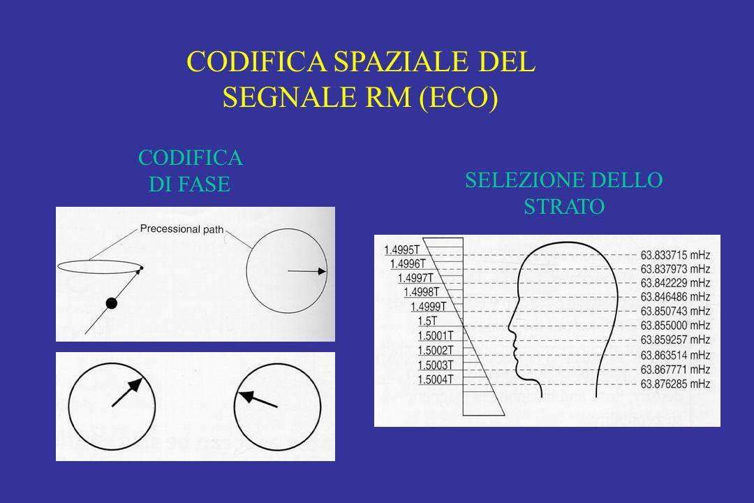 CODIFICA SPAZIALE DEL SEGNALE RM (ECO) CODIFICA DI FASE SELEZIONE DELLO STRATO