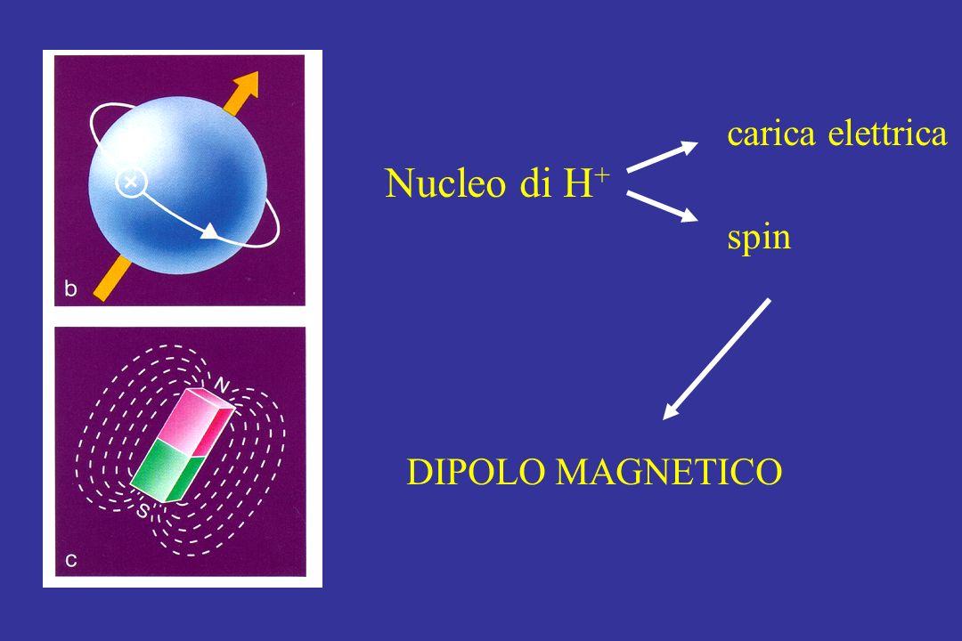 carica elettrica Nucleo di H + spin DIPOLO MAGNETICO