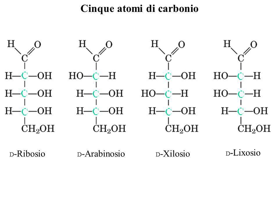 Cinque atomi di carbonio D -Ribosio D -Arabinosio D -Xilosio D -Lixosio