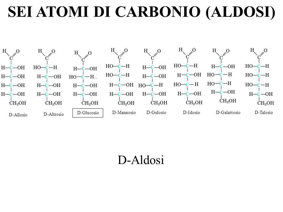 D-Aldosi SEI ATOMI DI CARBONIO (ALDOSI) D-Allosio D-Altrosio D-Glucosio D-Mannosio D-Gulosio D-Idosio D-Galattosio D-Talosio