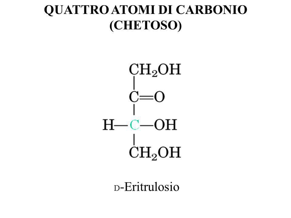 QUATTRO ATOMI DI CARBONIO (CHETOSO) D -Eritrulosio