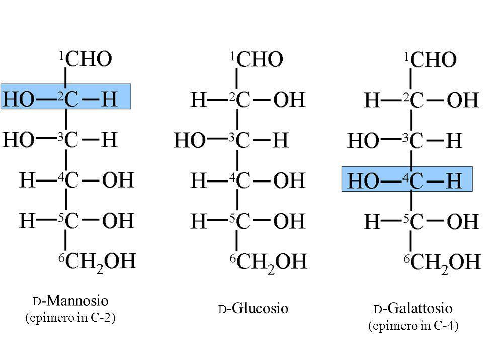 D -Mannosio (epimero in C-2) D -Galattosio (epimero in C-4) D -Glucosio