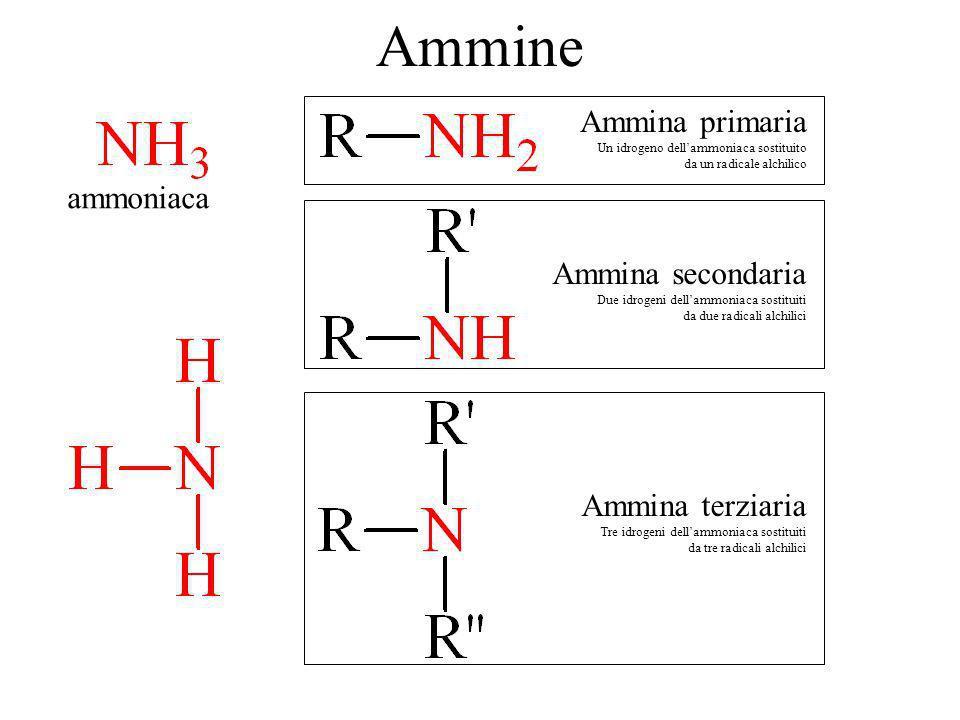 Ammine ammoniaca Ammina primaria Un idrogeno dellammoniaca sostituito da un radicale alchilico Ammina secondaria Due idrogeni dellammoniaca sostituiti