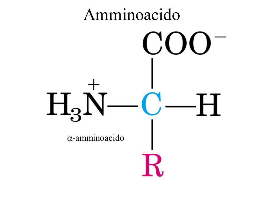 Amminoacido -amminoacido