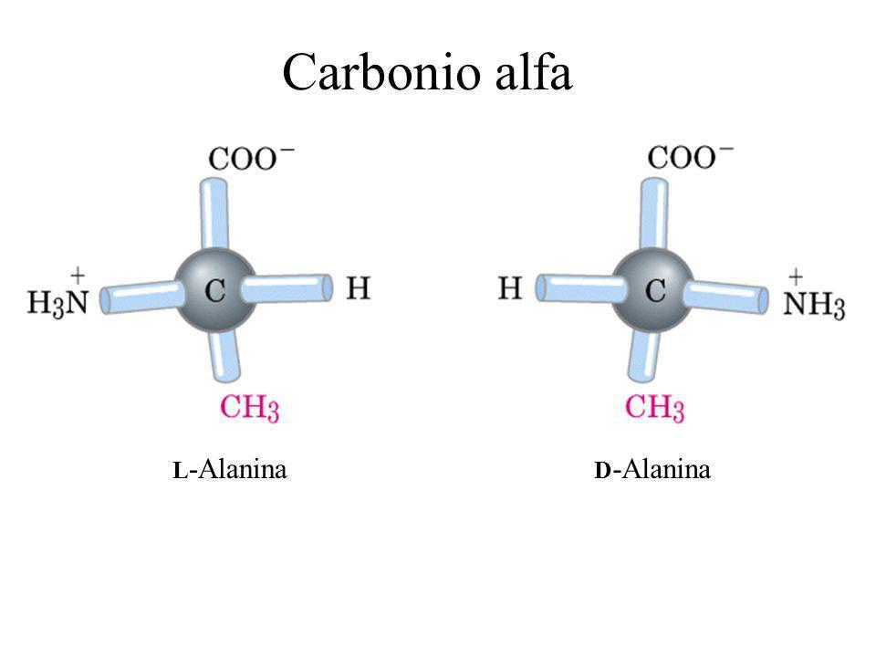 L -Alanina D -Alanina Carbonio alfa