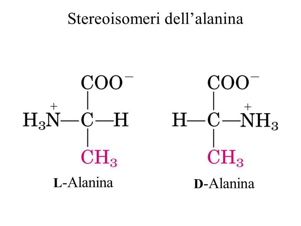 L -Alanina D -Alanina Stereoisomeri dellalanina