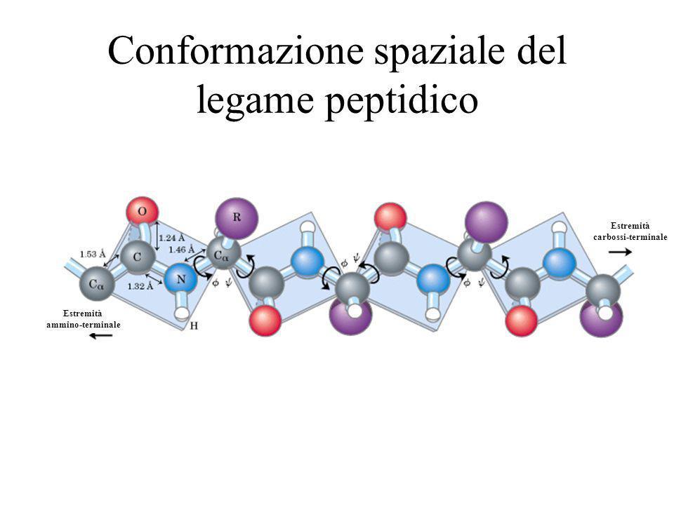 Estremità ammino-terminale Estremità carbossi-terminale Conformazione spaziale del legame peptidico