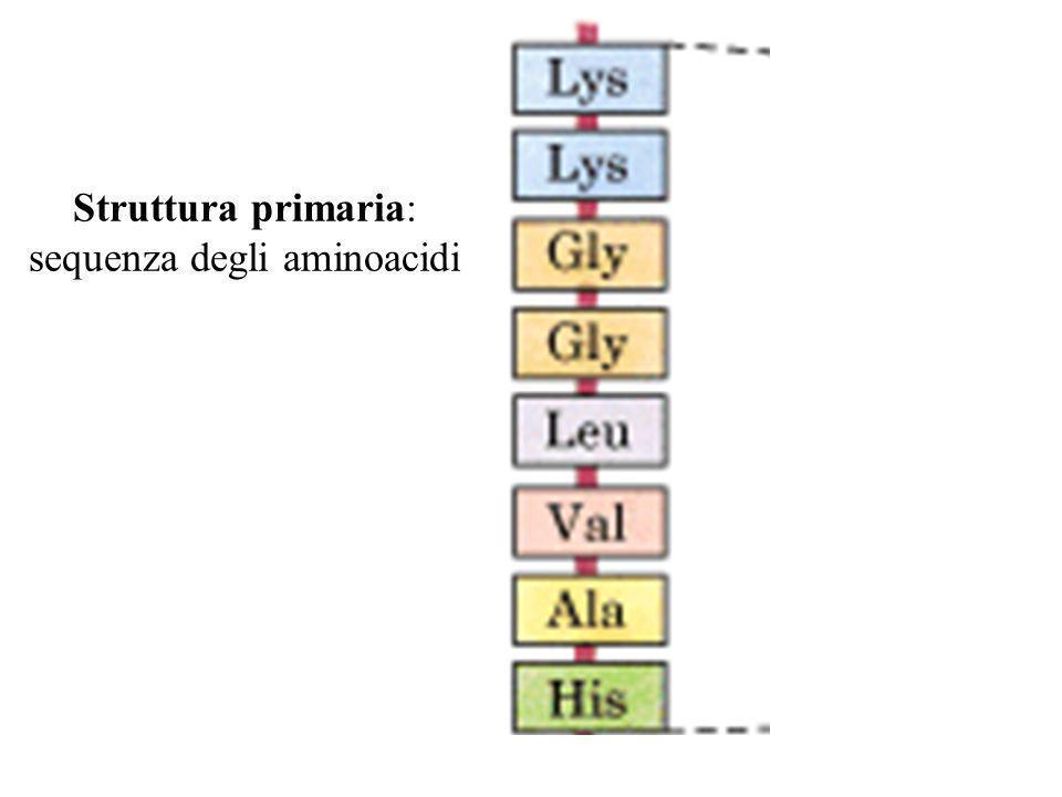 Struttura primaria: sequenza degli aminoacidi