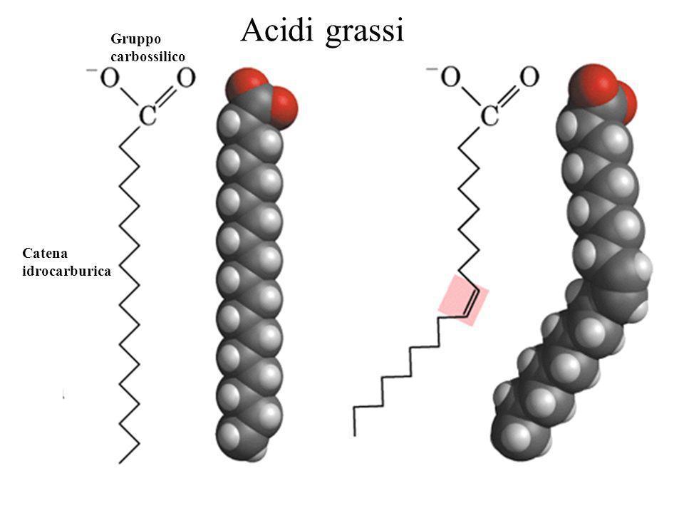 Gruppo carbossilico Catena idrocarburica Acidi grassi