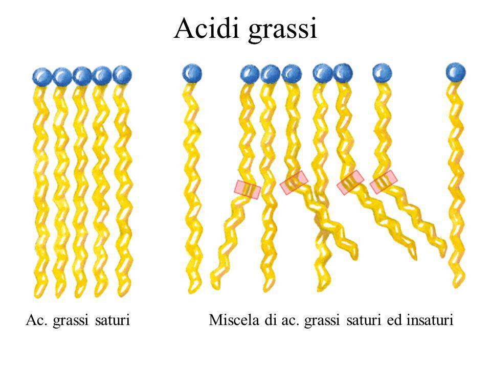Ac. grassi saturiMiscela di ac. grassi saturi ed insaturi Acidi grassi