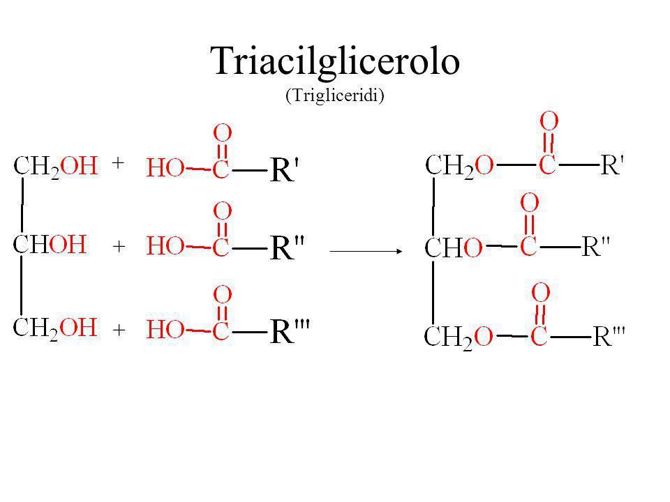 Triacilglicerolo (Trigliceridi) + + +