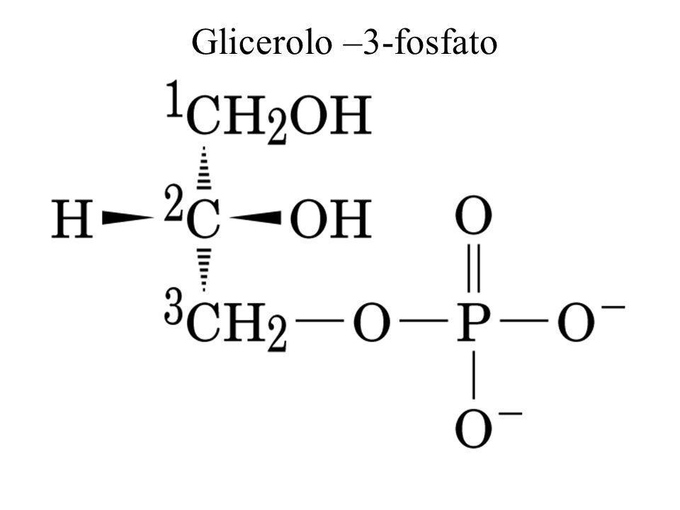 Glicerolo –3-fosfato