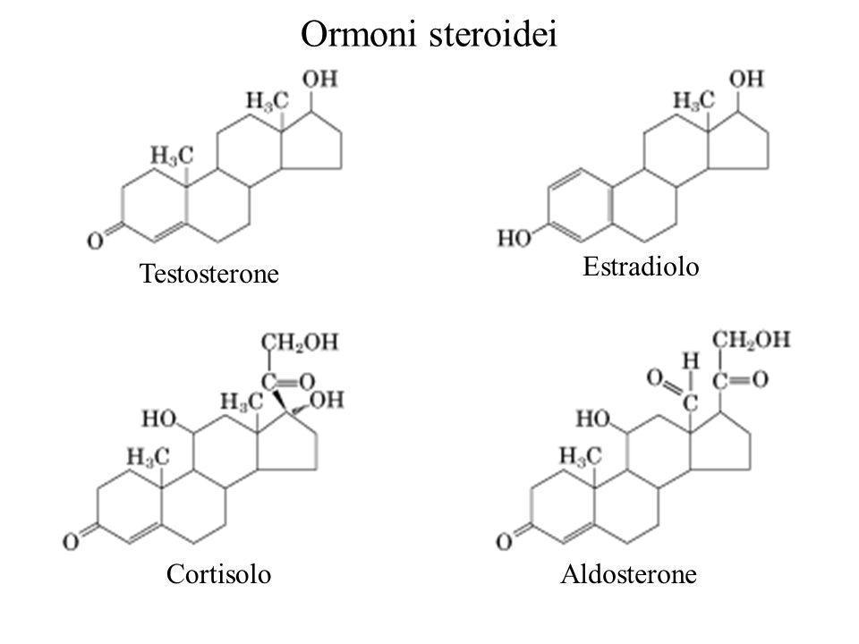 Testosterone Estradiolo CortisoloAldosterone Ormoni steroidei