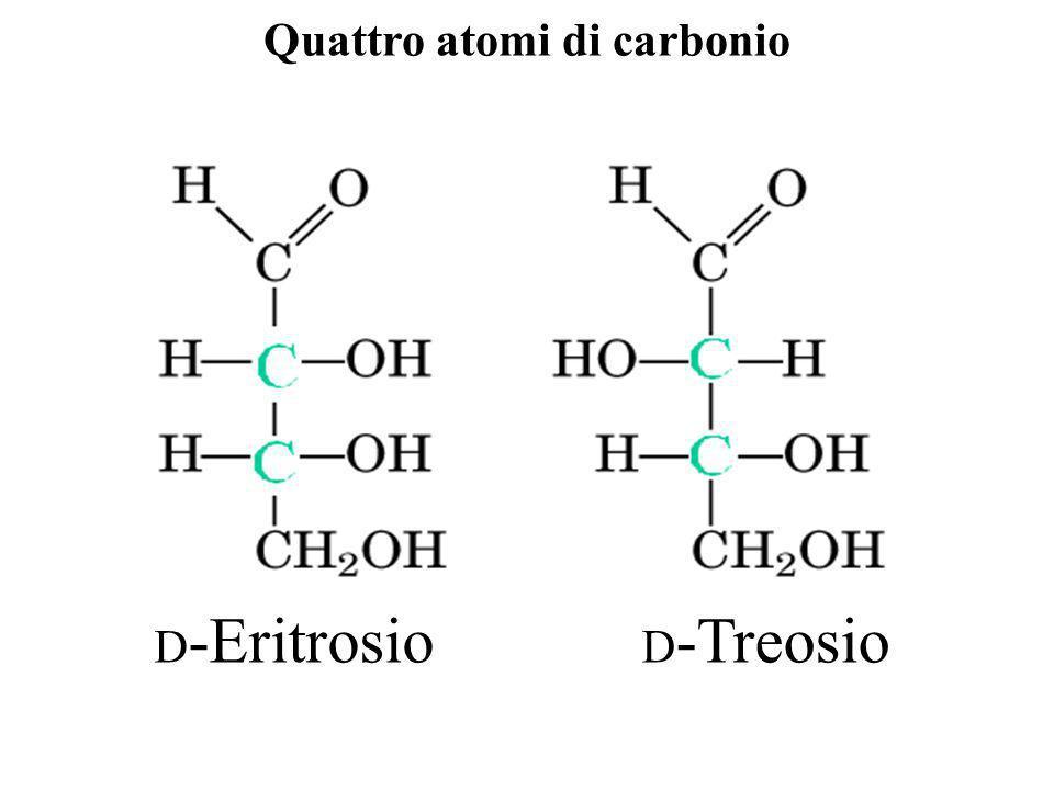 Quattro atomi di carbonio D -Eritrosio D -Treosio