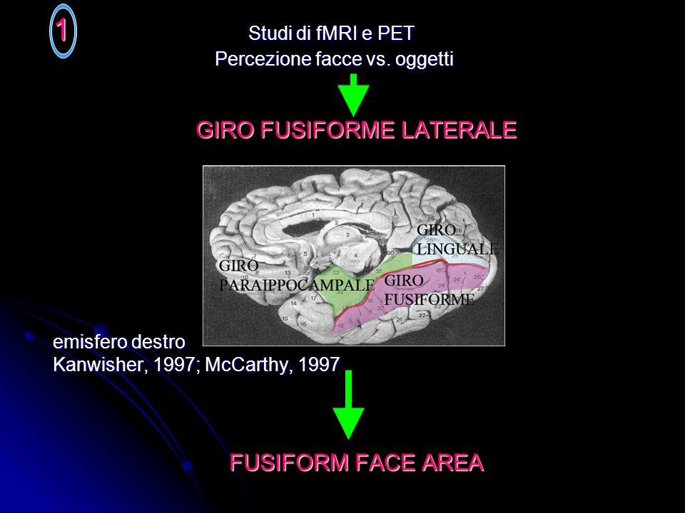 Studi sui primati non umani neuroni selettivi per i volti nei STP e IT Facce reali, immagini semplificate, disegni di facce, inoltre la dimensione, la posizione, lorientamento e lilluminazione della faccia NON alterava le risposte dei neuroni Facce reali, immagini semplificate, disegni di facce, inoltre la dimensione, la posizione, lorientamento e lilluminazione della faccia NON alterava le risposte dei neuroni CONFIGURAZIONE CANONICA