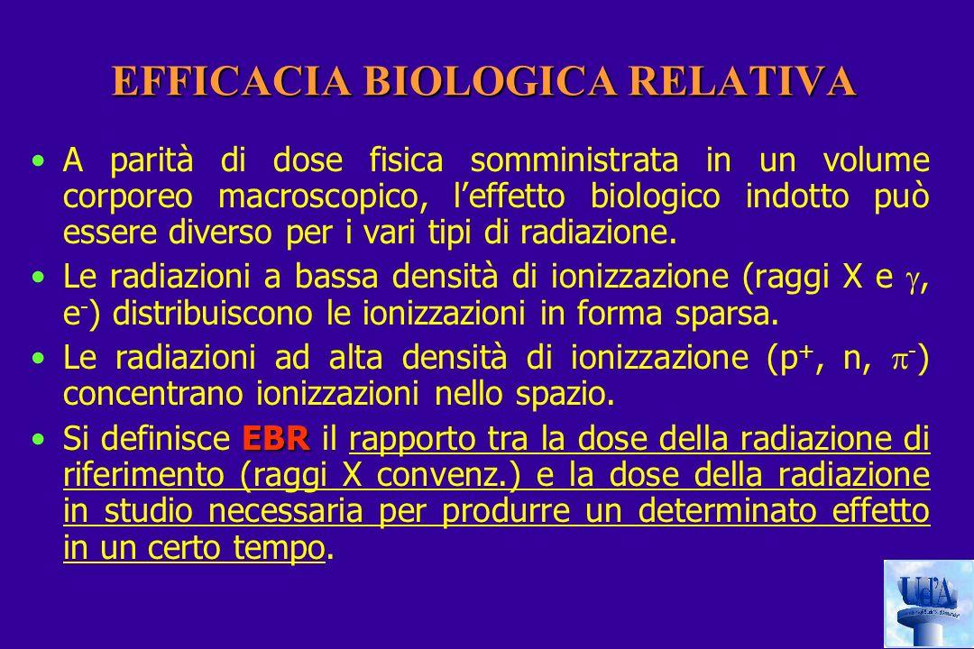EFFICACIA BIOLOGICA RELATIVA A parità di dose fisica somministrata in un volume corporeo macroscopico, leffetto biologico indotto può essere diverso per i vari tipi di radiazione.