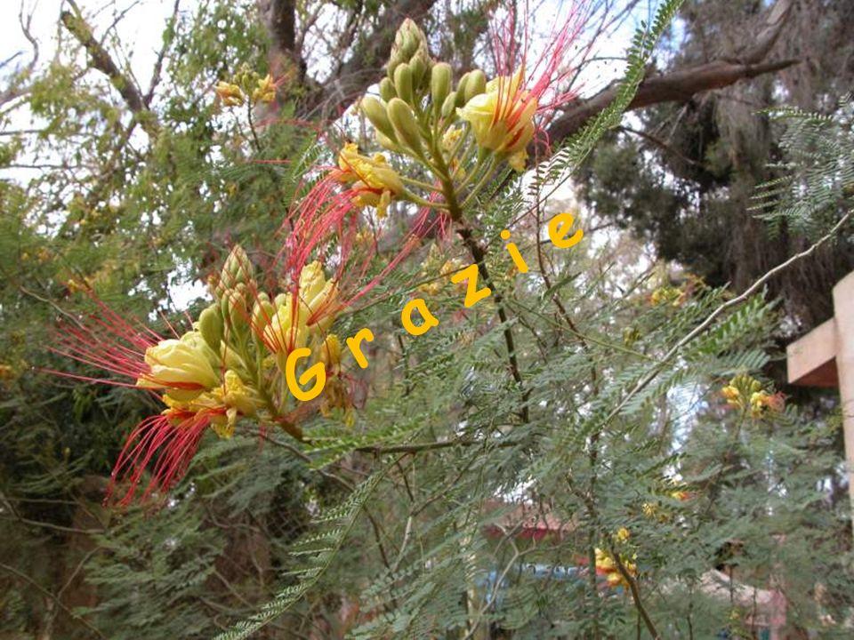 pavia 30 gennaio 201022 G r a z i e