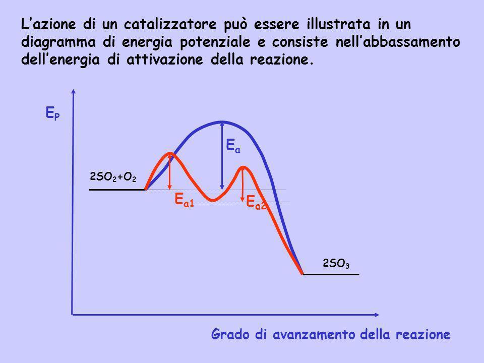 Lazione di un catalizzatore può essere illustrata in un diagramma di energia potenziale e consiste nellabbassamento dellenergia di attivazione della r