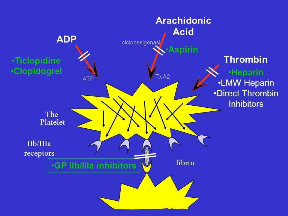 ADP Ticlopidine Clopidogrel Heparin LMW Heparin Direct Thrombin Inhibitors Aspirin Arachidonic Acid Thrombin IIb/IIIa receptors fibrin The Platelet GP