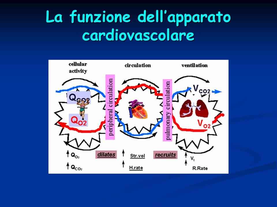 La funzione dellapparato cardiovascolare